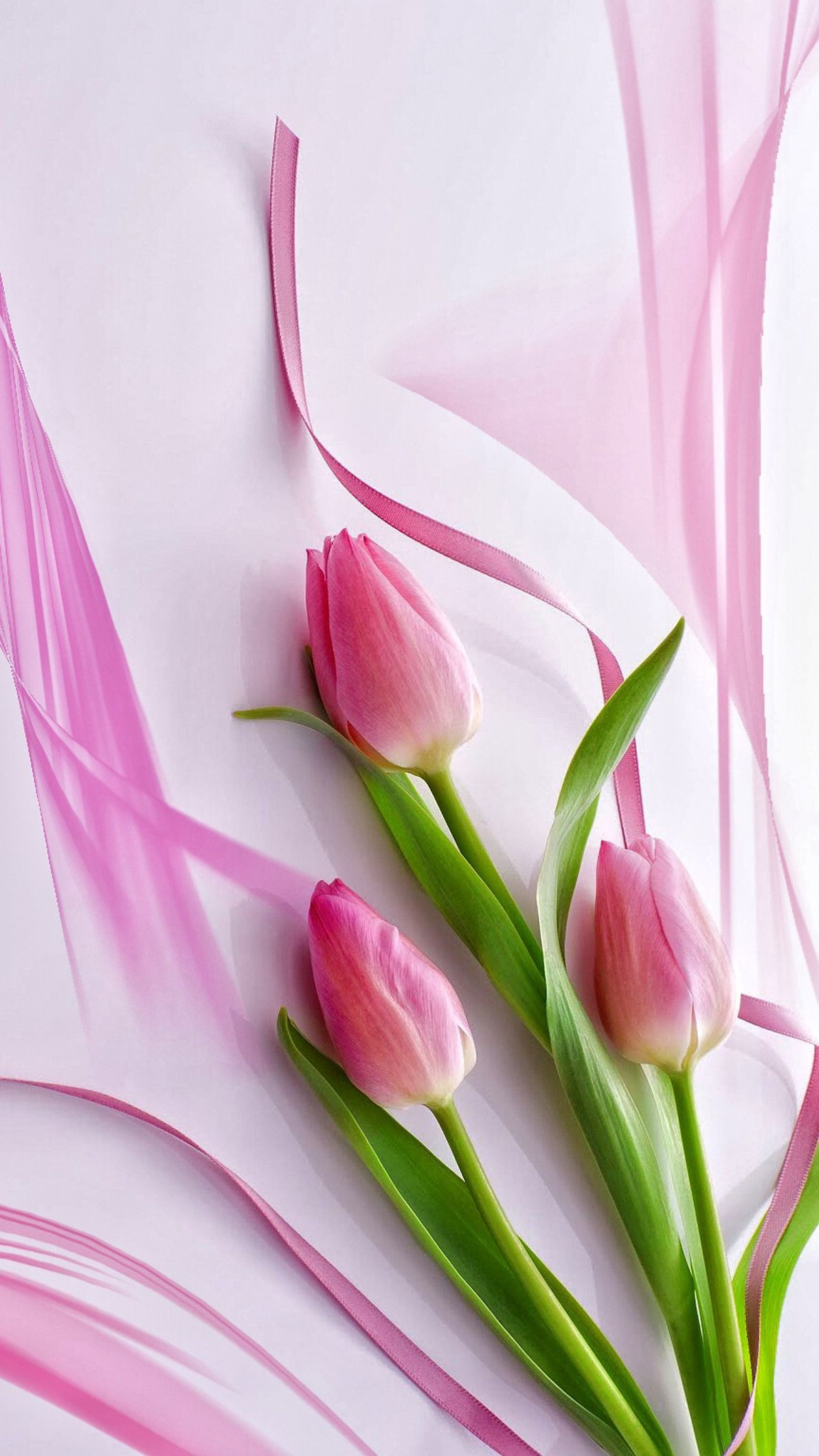 hoa tulip hồng đẹp nhất