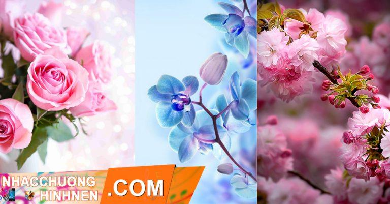 hình nền hoa tuyệt đẹp cho điện thoại