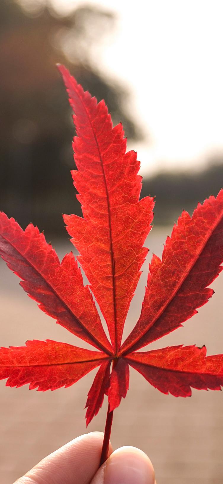hình nền mùa thu lãng mạn cho dế yêu